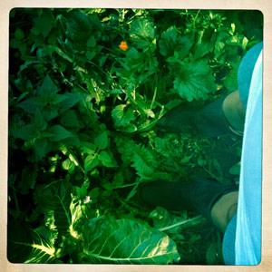 Zeleni sok iz naše gradske džungle